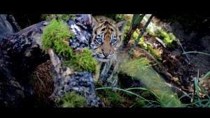 2eme photo tigre film