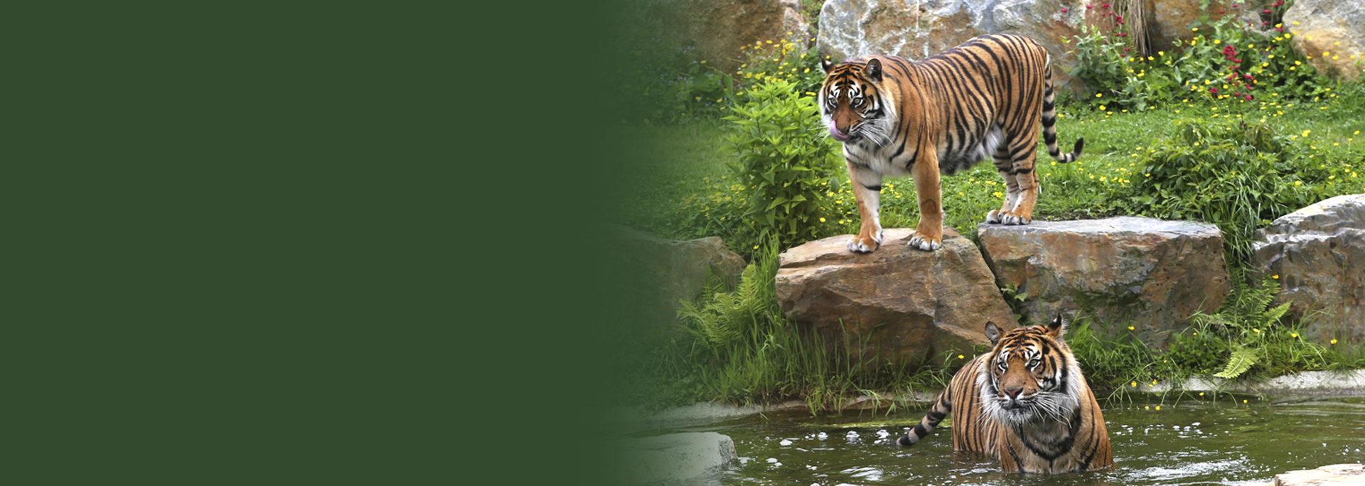 Votre parc zoologique en Normandie