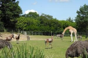 animaux plaine africaine