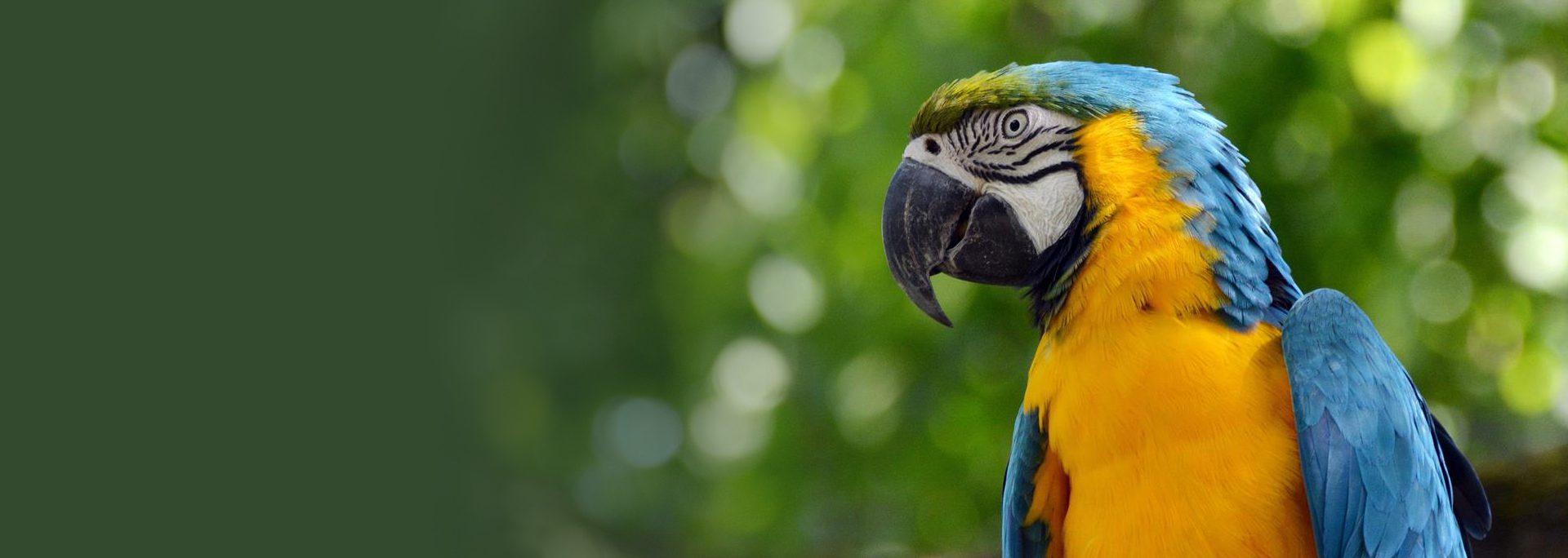 La volière des perroquets : prévue courant printemps 2018
