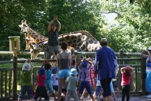girafes atelier Afrique