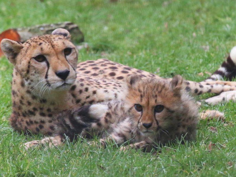 Dernières naissances au Zoo