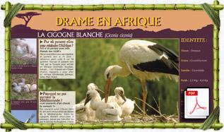 panneau_pedago_cigogne_blanche
