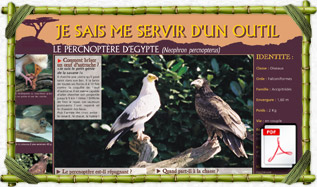panneau_pedago_percnoptere_egypte