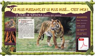 panneau_pedago_tigre_sumatra
