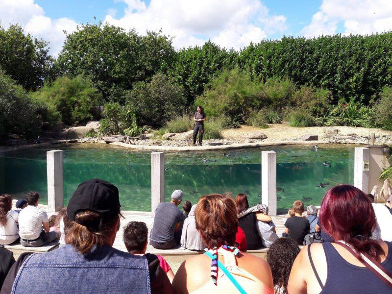 Bienvenue au parc zoologique et paysager de Champrépus…