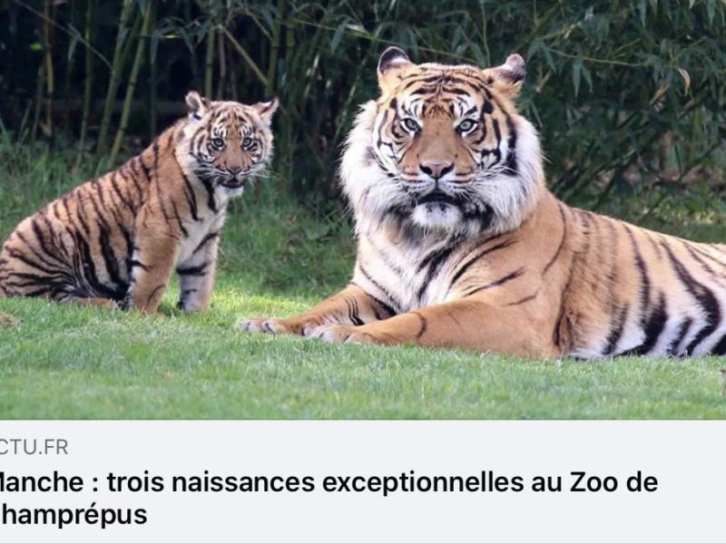 La presse parle du Zoo