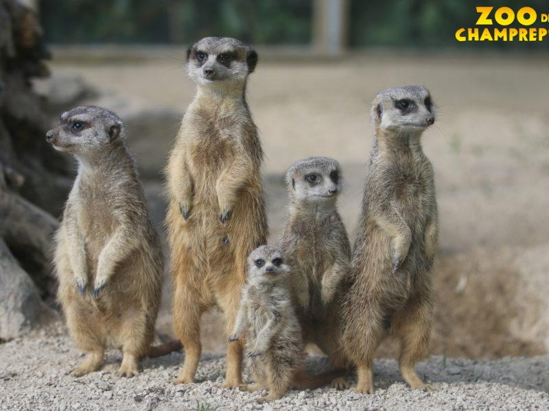 Des bébés au Zoo de Champrépus