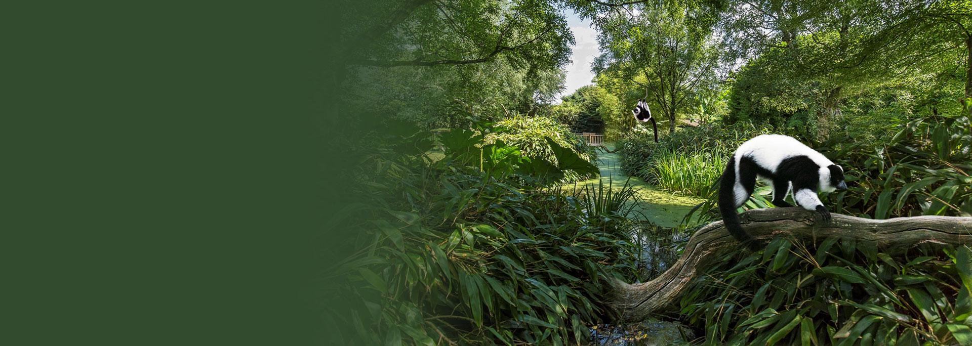 Du Jardin des 3 continents au Jardin exotique