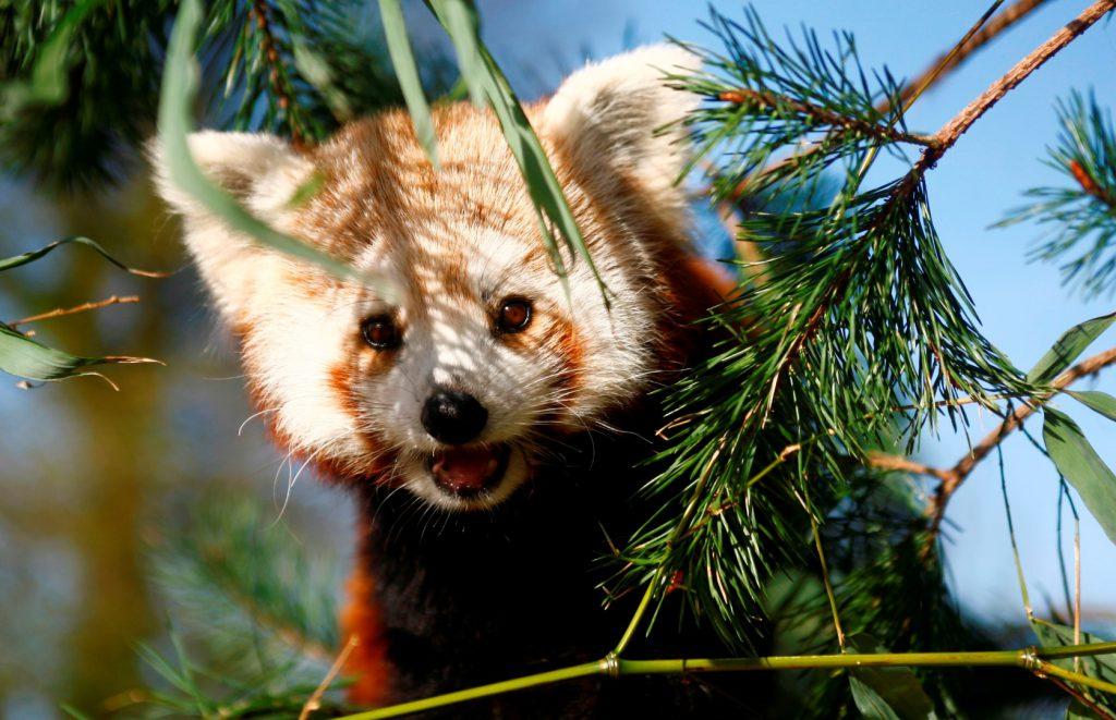 Centres de loisirs cr ches zoo champrepus for Peluche carpe koi