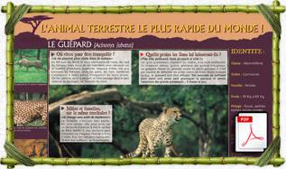 panneau_pedago_guepard