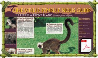 panneau_pedago_lemur_afrontblanc